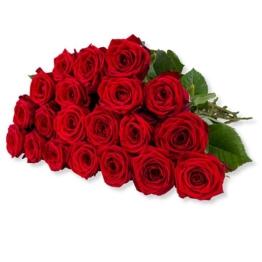 20 langstielige rote Premium-Rosen