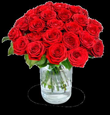 20 rote Premium-Rosen Red Naomi